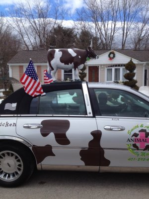Audrey driving the cow car in the West Warwick St Patricks Day Parade.