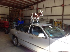 The New Cow Car