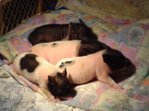 SleepingPaigepiglets